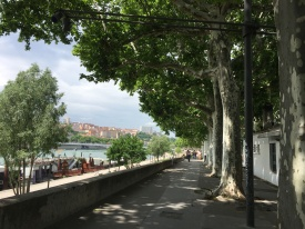 ndw_summer travel lyon plane trees